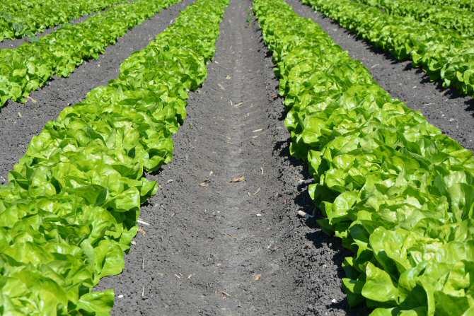 Contaminación por plomo en terrenos agrícolas que no siempre han tenido este uso