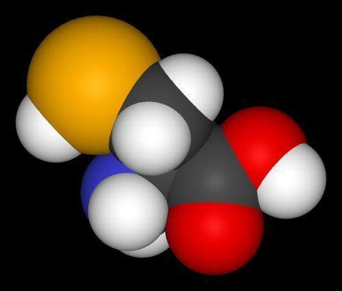 Desvelando el papel de la selenocisteína, el misterioso aminoácido 21