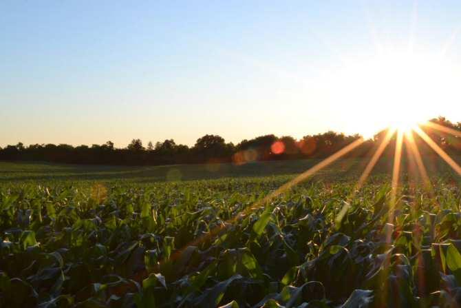 Mejor rendimiento para células solares de perovskita mixtas de estaño-plomo