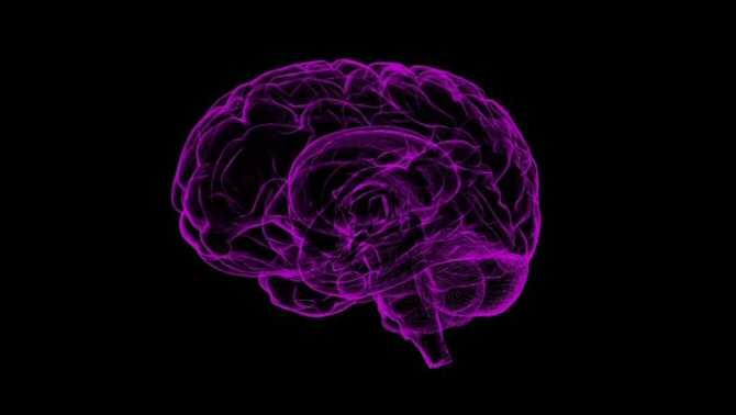 Persistencia en la vejez de huellas moleculares cerebrales de niveles altos de escolarización