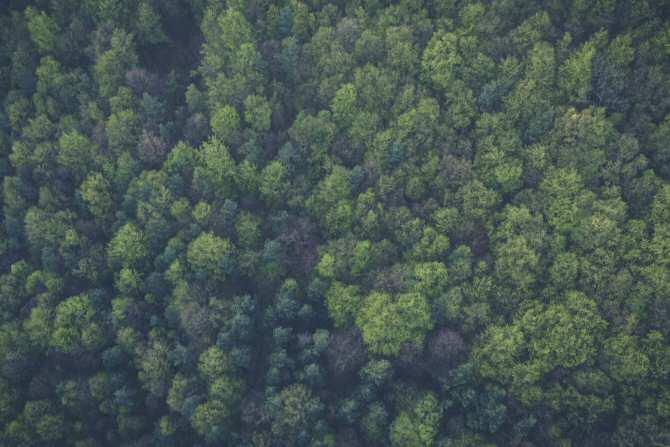 Mantener vivos los pulmones del planeta: Cinco cosas que debes conocer sobre los bosques