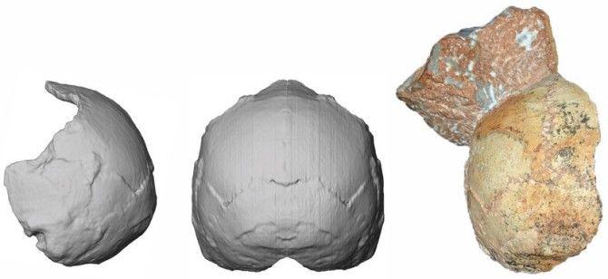 Hallado en Grecia el fósil humano más antiguo fuera de África
