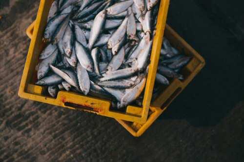 La sobrepesca y el cambio climático aumentan los niveles de mercurio en el pescado