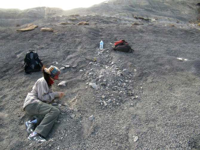 Hacia la identificación inequívoca, en rocas, de señales de petróleo