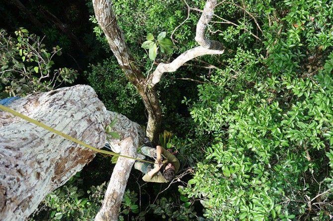 ¿Están perdiendo los bosques tropicales su capacidad de almacenar carbono?