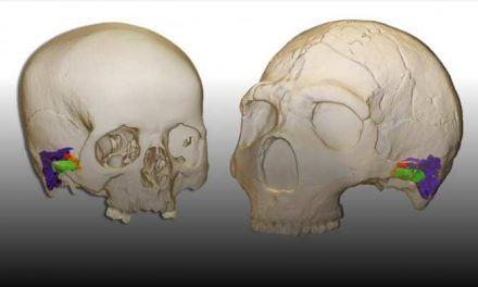 Los neandertales hablaban