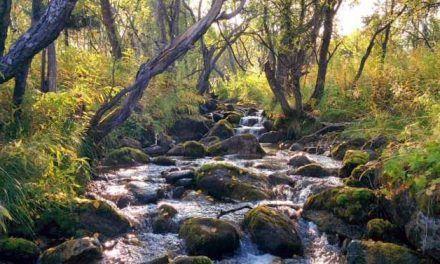 ¿Los ríos emiten más dióxido de carbono por la noche?