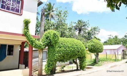 Las esculturas verdes del topiarista dominicano Francisco Gutiérrez