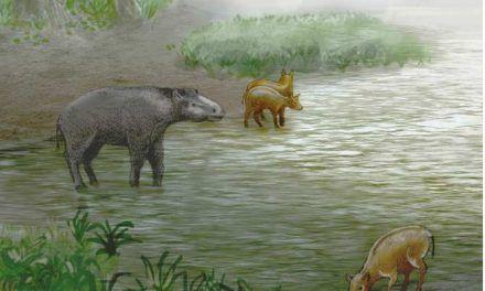 Nuevas especies de pseudocaballos de hace 37 millones de años