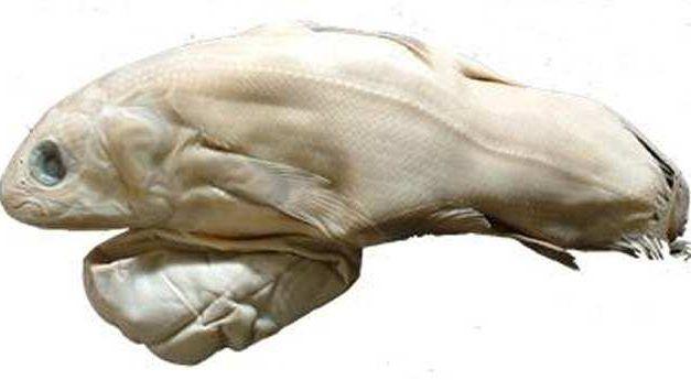 La inesperada longevidad de los celacantos sorprende a la comunidad científica