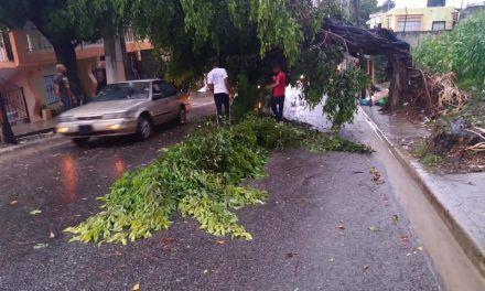 Ventarrón derriba árbol en calle Luperón, provocando un apagón