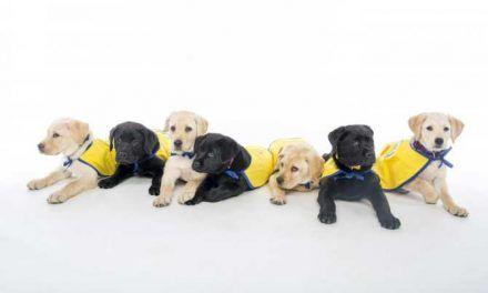 Nuevas habilidades cognitivas con las que ya nacen los perros