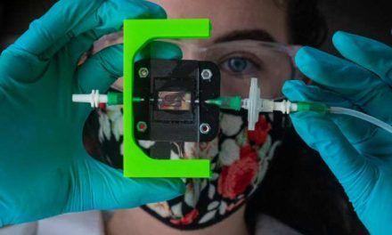 Hacia un implante para producir insulina en pacientes de diabetes tipo 1