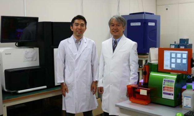 Nueva terapia con células madre para la artrosis de rodilla