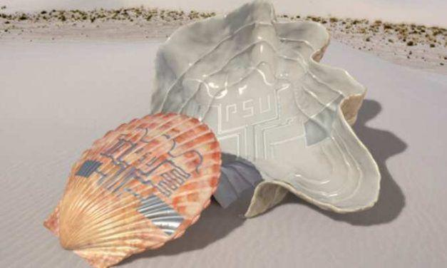 Conchas marinas con circuitos eléctricos
