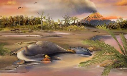 Hallan restos orgánicos de núcleos de células de dinosaurios
