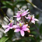 SDO: 54 años dedicados a promover el cultivo de las orquídeas
