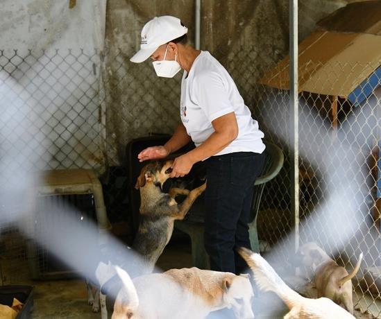 Solicitan ayuda para el refugio de animales de La Victoria