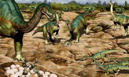 Conducta social compleja en los primeros dinosaurios