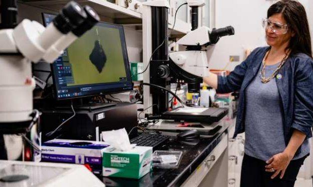 Examinando en laboratorios de la Tierra muestras del asteroide Ryugu